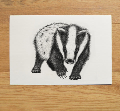 Badger artwork in black ink