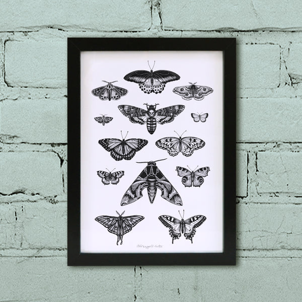 Moth & Butterfly art print in black frame.