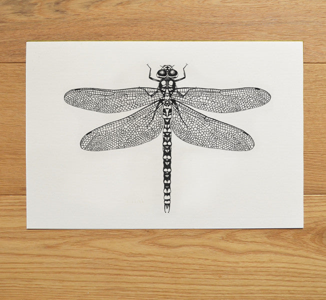 Hawker dragonfly ink illustration
