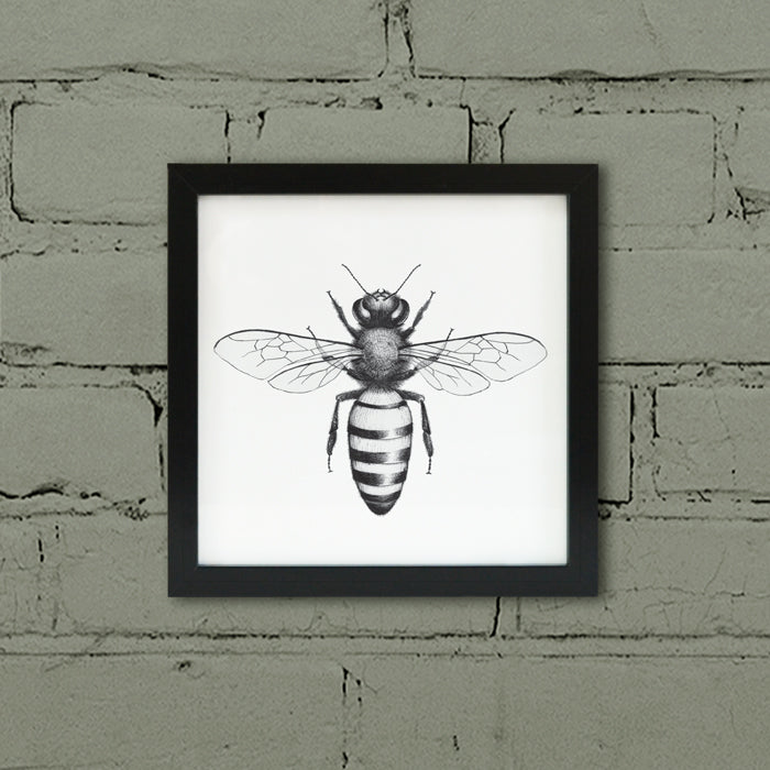 Framed Honey Bee print.