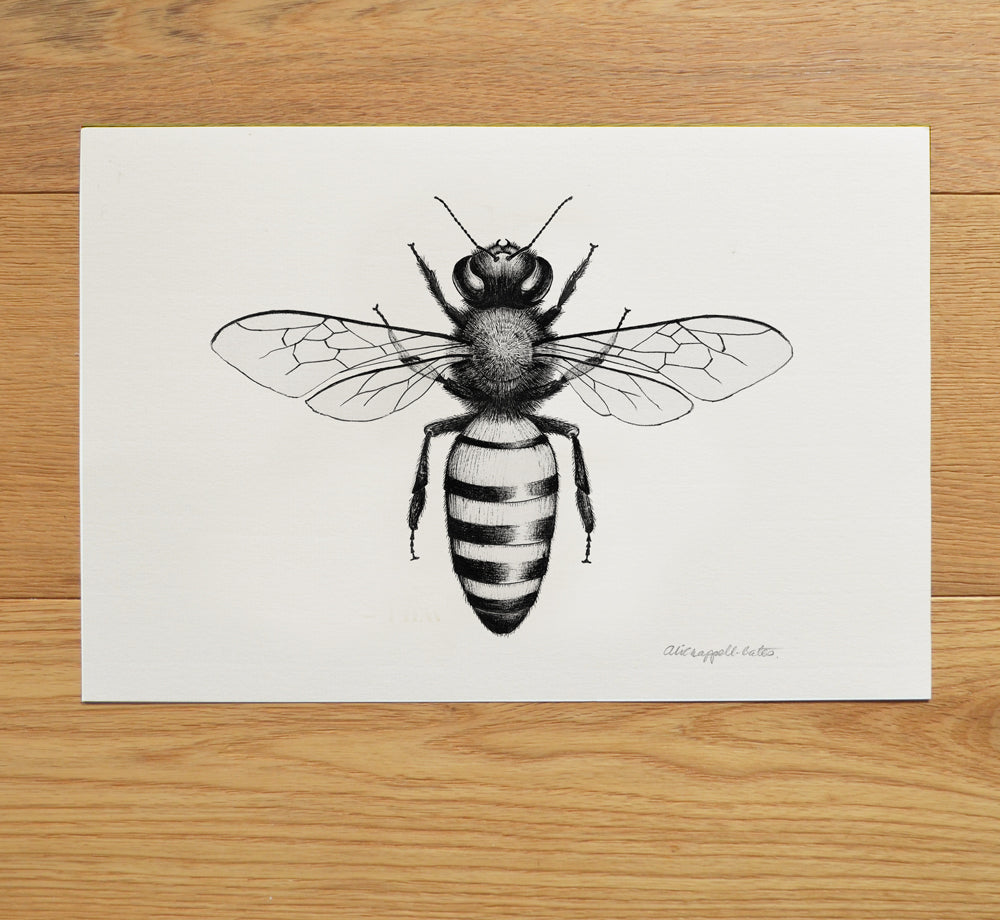 Honey Bee art print.