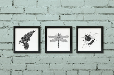 Pick and mix - Set of three framed wildlife art prints