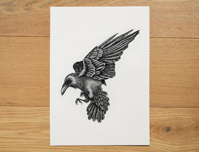 Black raven illustration