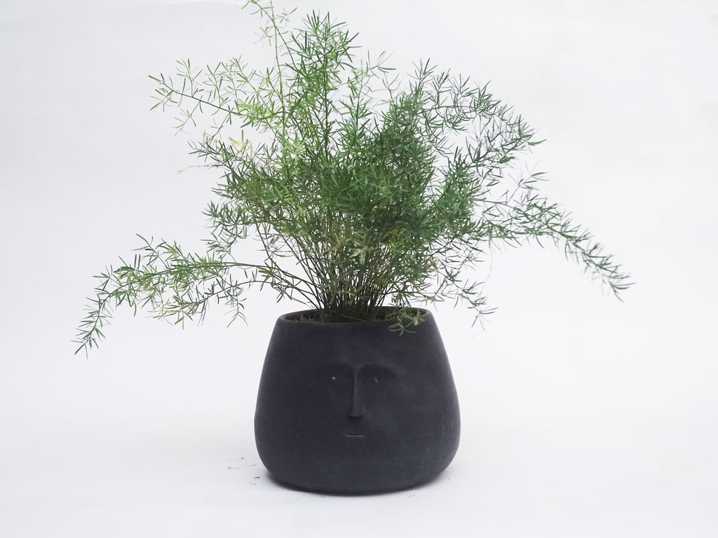 Black Highbrow Planter