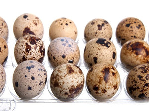 Quail Eggs carton package of 15 eggs