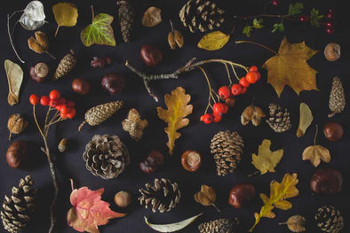 Autumn Leaves, Seeds and Berries