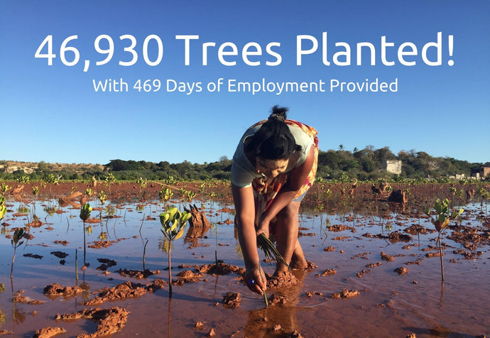 BAMWOO Has Planted 46,930 Trees | One Brush = One Tree Mission