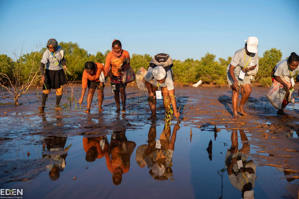 Eden reforestation team planting mangrove trees in Madagascar