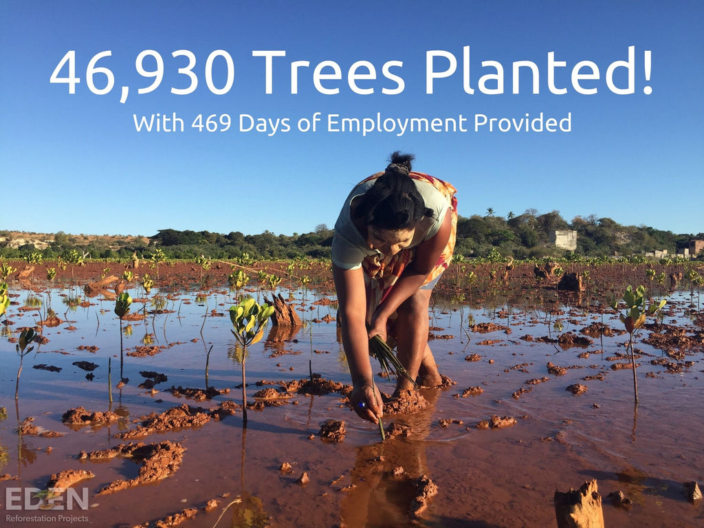 BAMWOO has planted 46,930 trees with their bamboo toothbrushes