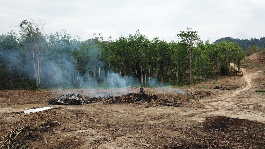 Deforestation in Indonesia to make room for palm oil plantations