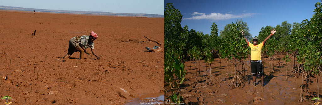 Before and after reforestation in Madagascar