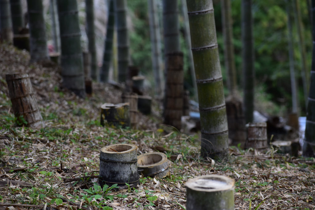 The harvested bamboo poles regenerate and continue to grow back