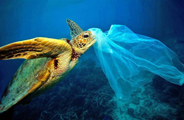 Turtle choking on plastic waste in ocean