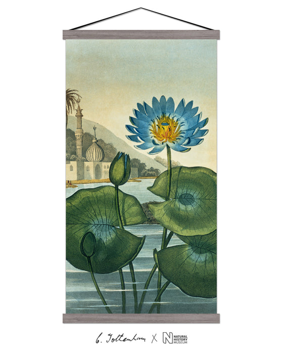 The Blue Egyptian Water Lily Print
