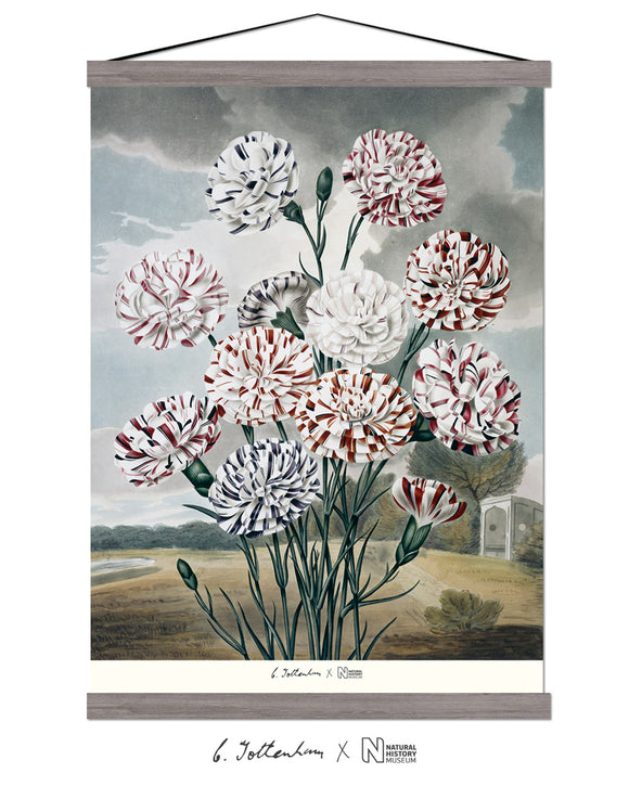 Samuel Curtis, Chrysanths, Silk Wall Hanging