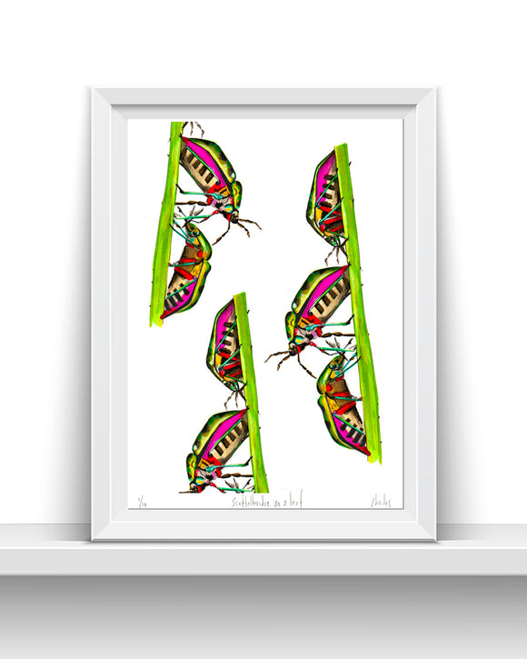 Scutelleridae on a leaf | A3 Signed edition of 10