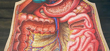 Dr. Livingston's Anatomy Jigsaw Puzzle: The Human Abdomen Review by Just a Mom Trying to Make It Happen
