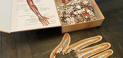 Dr. Livingston's Anatomy Jigsaw Puzzle: The Human Left Arm Review by Just a Mom Trying to Make It Happen