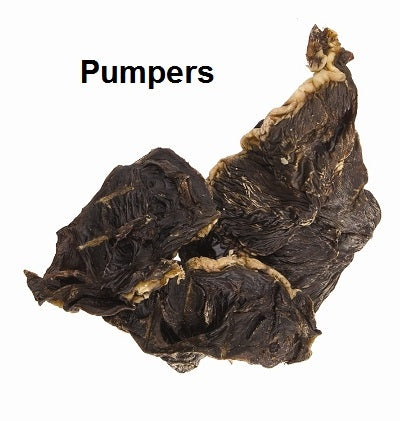 Jones Natural Chews Pumpers Dog Treat