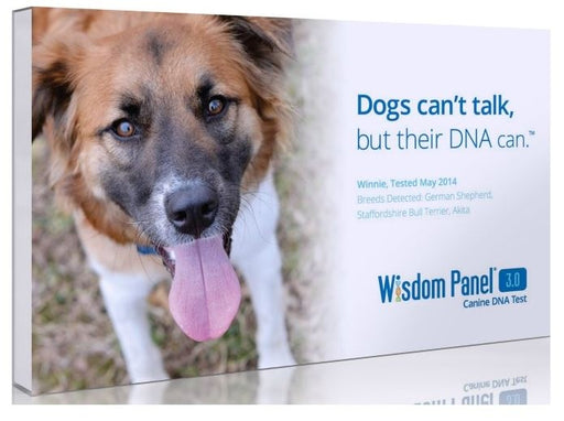 Wisdom Panel 3.0 Canine Genetic Test