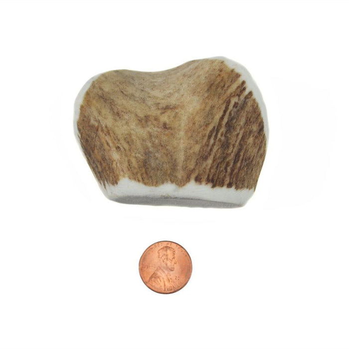 Choice Wise Whole Antler Chew - Corner Cut