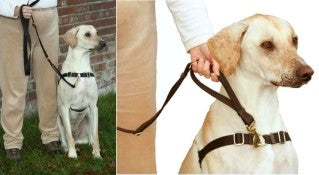 Wonder Walker Service Leash