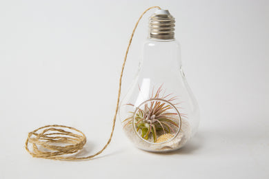 Light Bulb Kit with Sand and Shell