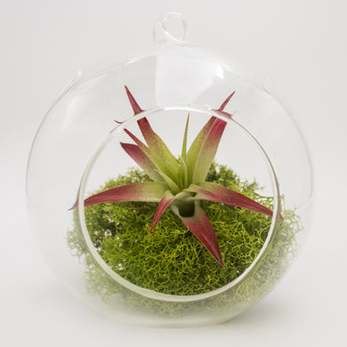 Big Red Globe Kit with Moss