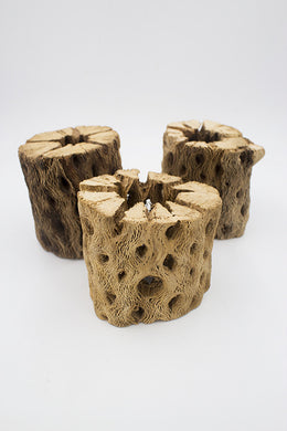 Cholla Wood (Thick Walled)(3