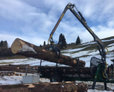 Huge logs being lifting by the FARMA 5.3D crane on an 8 ton forestry trailer.