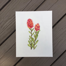 Indian Paintbrush 3D Botanical