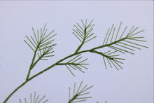 Dill 3d Botanical Close Up