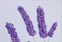 Lavender 3d Botanical Close Up