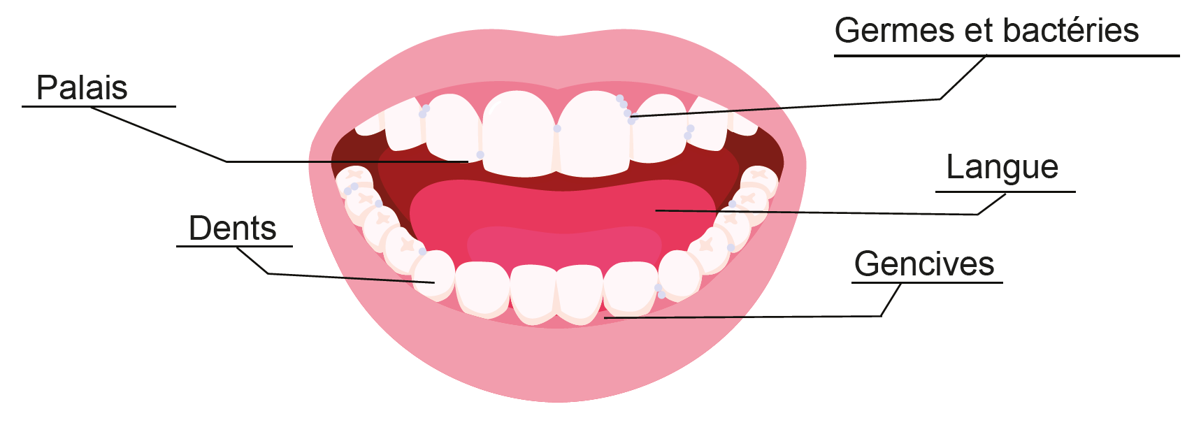 Mouth graphic