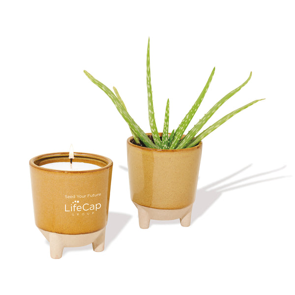 Glow & Grow Gift Set: Aloe