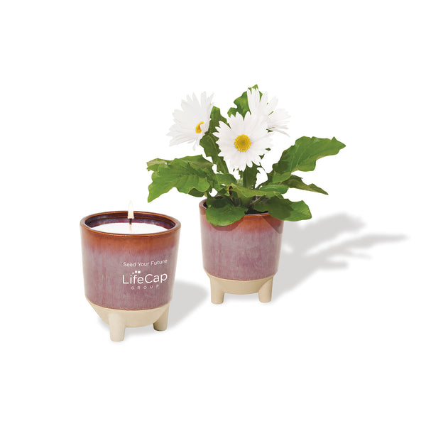 Glow & Grow Gift Set: Daisy