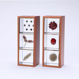 3 Sola cubes set with display case (B)