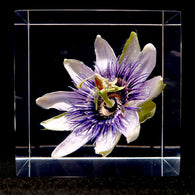 Passion flower in polyester resin  (G)