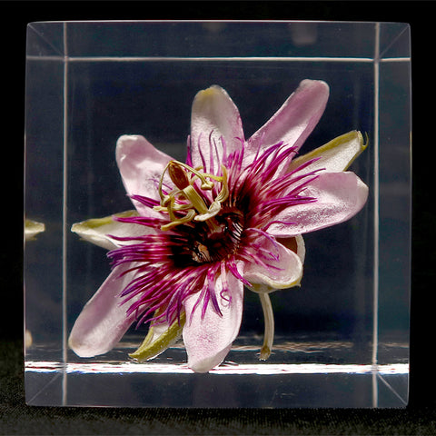 Passion flower in polyester resin  (H)