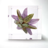 Passion flower in polyester resin