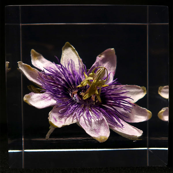 Passion flower in polyester resin  (K)