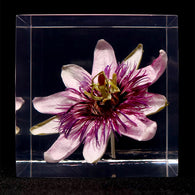 Passion flower in polyester resin  (M)