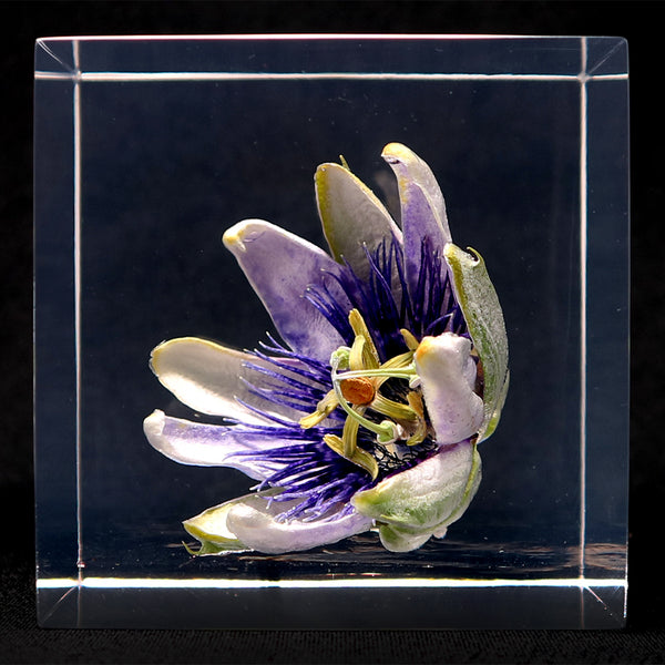 Passion flower in polyester resin  (O)