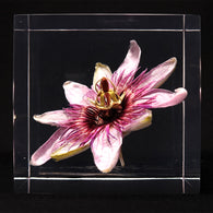 Passion flower in polyester resin  (P)