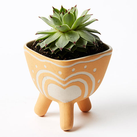 POCKET PLANTER MUSTARD FOOTED