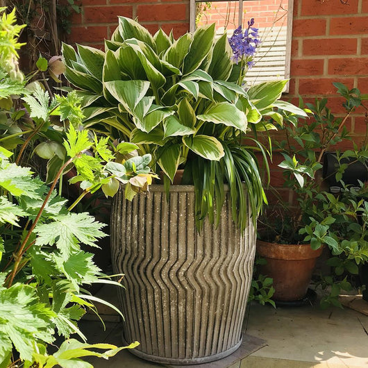 Set of 2 Galvanised Dolly Planters Garden Pots Candle and Blue Interiors