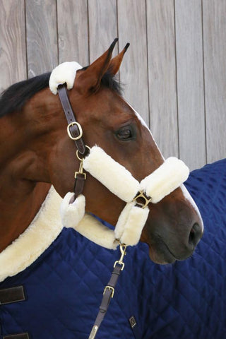 Kentucky Halter Set