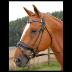 Dyon Dressage Collection Large Flash Noseband
