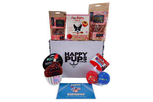 Small Dog Birthday Box with Kong Ball Toys