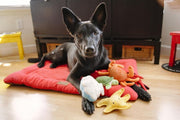 A black dog with the yellow starfish dog toy and other toys from the P.L.A.Y range of dog toys